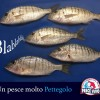 Il Pesce Pettegolo