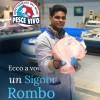 Un Signor Rombo
