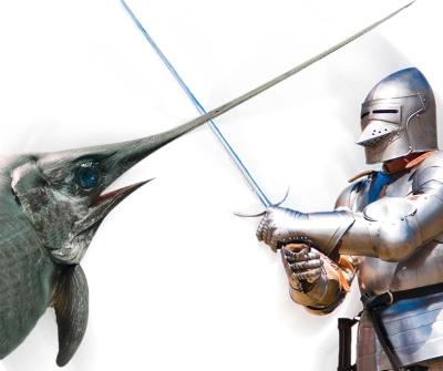 Spezziamo una lancia per il pesce spada