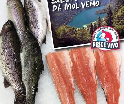Trote Salmonate di Molveno