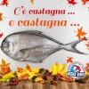 Pesce Castagna