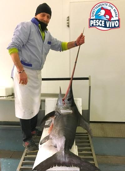 Pesce Spada dalla Calabria