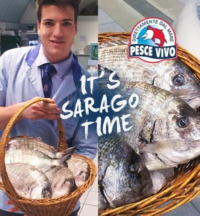 Sarago dalla Sardegna per cena?