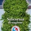 Salicornia di stagione
