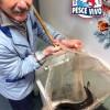 Anguille di Comacchio per il Cenone di Capodanno