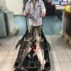 Pesce Spada fornitura giornaliera
