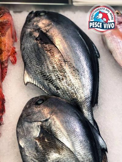 Il pesce castagna