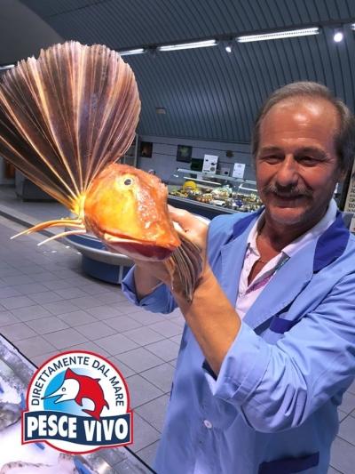 gallinella-pescevivo