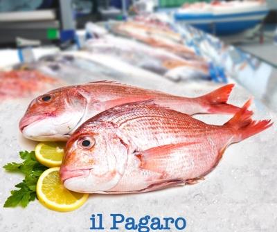 Un pesce dalle carni bianche e molto gustose? Questo è il Pagaro.
