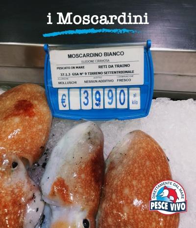post-moscardini