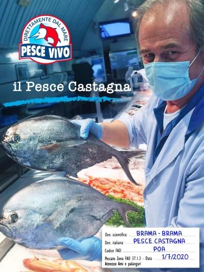 pesce-castagna
