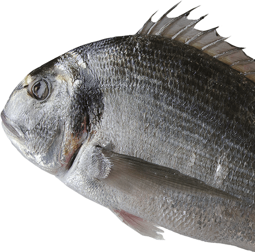 Ancora Pescheria Pesce Vivo